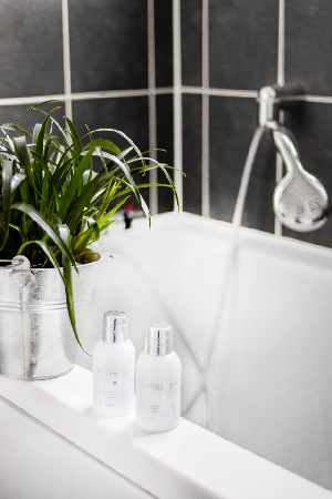 Welke planten doen het goed in de badkamer
